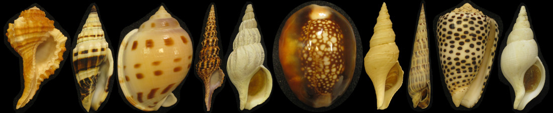 Molluscan Auction